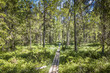 canvas print picture - Best of Sweden - deep forest