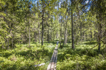 Best of Sweden - deep forest