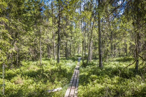 canvas print picture Best of Sweden - deep forest