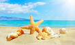 Summer beach with starfish and shells