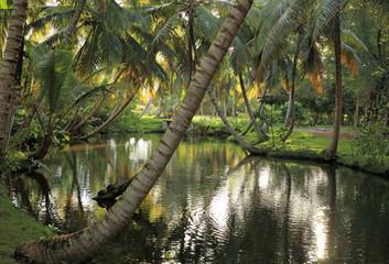 rivière en forêt tropicale