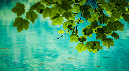 Green leaves over water surface