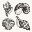 Seashells - 69564845