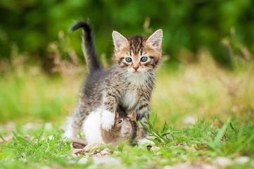 Little tabby kitten with rat outdoors