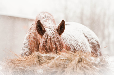 Horse on snowy winter day