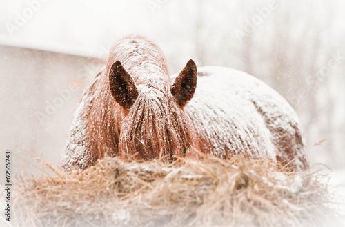 Leinwandbild Motiv Horse on snowy winter day