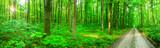 Fototapeta panorama forest