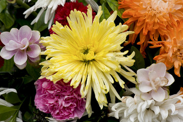 Yellow Chrysanthemum in flower bouquet.