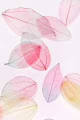 color leaves