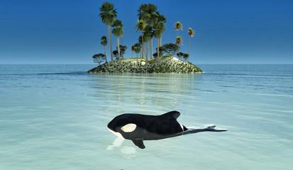 bebe orca