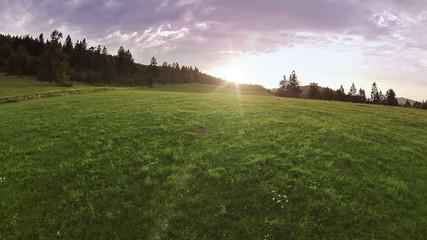Flying over grass in sunset