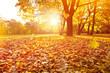 goldener herbst sonnenuntergang