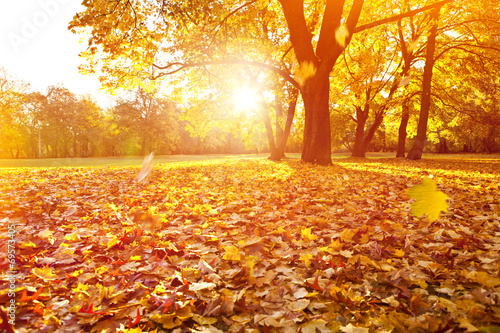 canvas print picture goldener herbst sonnenuntergang