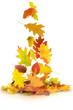 Herbst 65