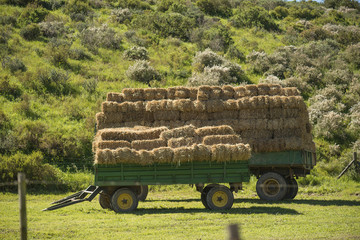 trailer with hay bales