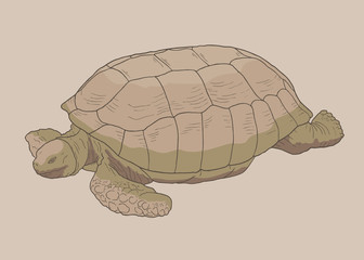 One turtle