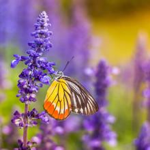 Insectes et des fleurs