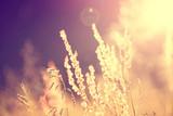 Fototapety Golden blurry vintage meadow