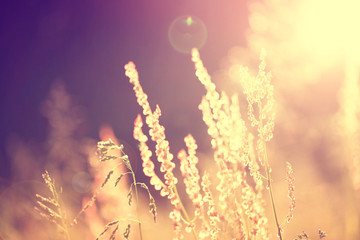 Golden blurry vintage meadow