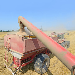Overloading grain harvester