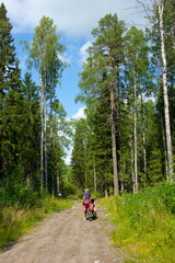 girl on the bicycle between tall trees