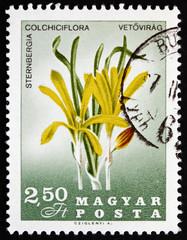 Postage stamp Hungary 1967 Sternbergia Colchiciflora, Flowering