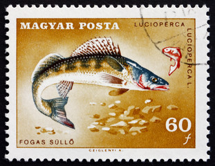 Postage stamp Hungary 1967 Pike Perch, Fish