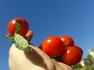 Pomodorini alla mano