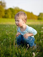 little boy in the meadow