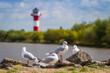 Leinwandbild Motiv Leuchtturm an der Elbe