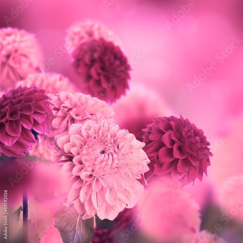 Leinwandbild Motiv Colorful autumn chrysanthemums with flares, floral background