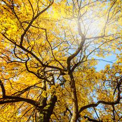 Herbstbaum :)