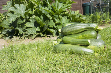 Glut of Courgettes