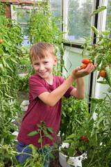 Kind hält eine saftige Tomate