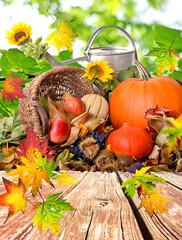 Herbst: Stillleben mit Früchten und Sonnenblumen :)