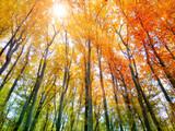 Farbexplosion im Herbstwald mit Sonnenlicht