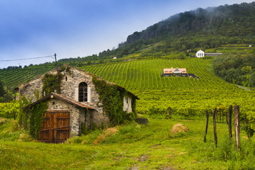 Winery, vineyard landscape in Hungary.