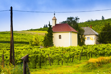 Winery, wine landscape in Hungary.