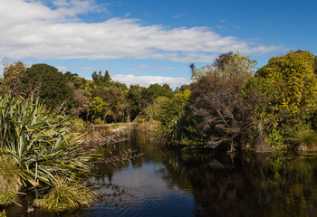 Native Bush Lake