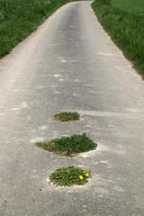 Feldweg mit grünen Inseln