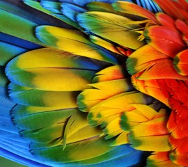 Macaw Feathers (Rainbow)