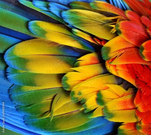 Macaw Feathers (Rainbow)