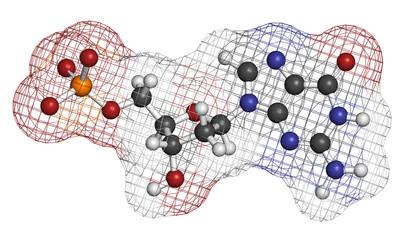 Deoxyguanosine monophosphate (dGMP) nucleotide molecule.