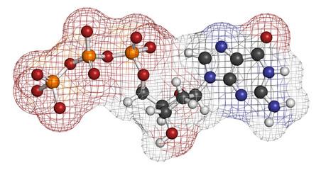 Deoxyguanosine triphosphate (dGTP) nucleotide molecule.