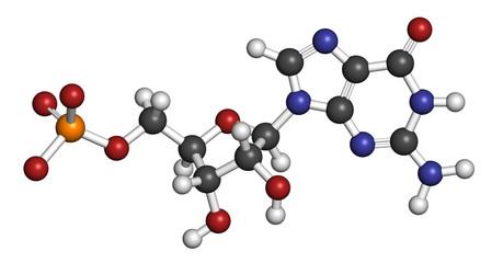 Guanosine monophosphate (GMP, guanylic acid) RNA building block