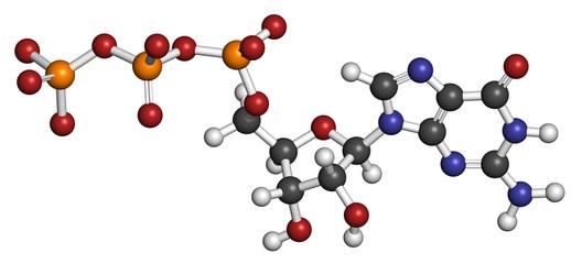 Guanosine triphosphate (GTP) RNA building block molecule