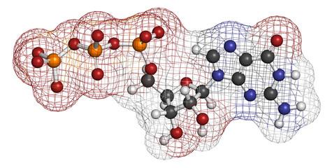 Guanosine triphosphate (GTP) RNA building block molecule.