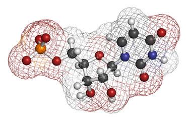 Uridine monophosphate (UMP, uridylic acid) nucleotide molecule.