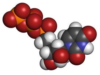 Uridine triphosphate (UTP) nucleotide molecule.