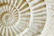 Leinwandbild Motiv Ammonite prehistoric fossil